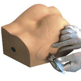 Modelo Para Practica De Inyección Intramuscular Nalga Glúteo